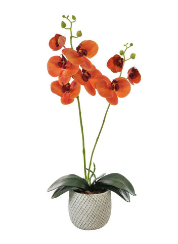 Two Stem Orchid Arrangement - Sunset