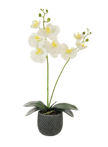 Two Stem Orchid Arrangement - White