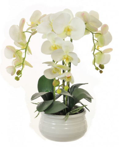 Triple Orchid Arrangement In Lined Bowl - White