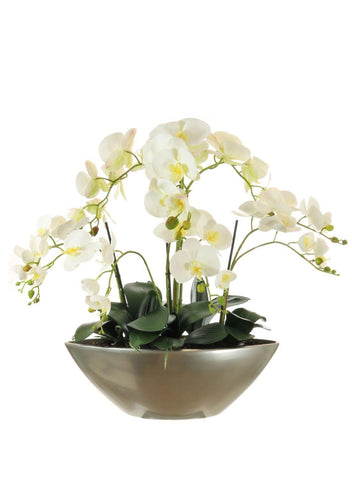 Orchid Arrangement In Ark Bowl - White
