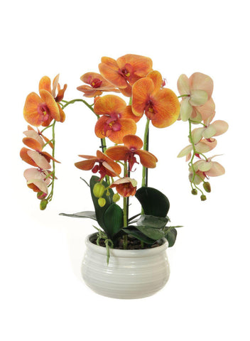 Triple Orchid Arrangement In Lined Bowl - Orange