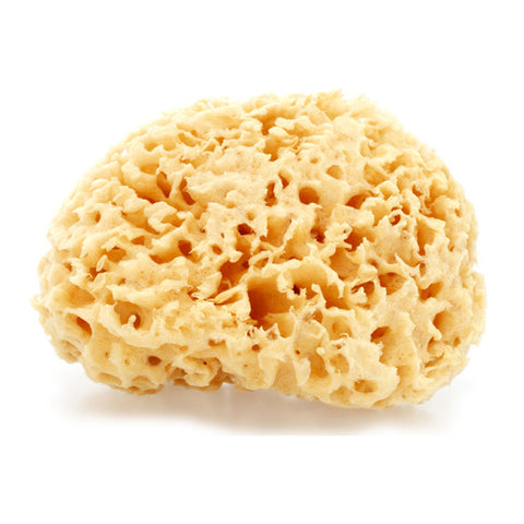 Natural Rock Island Sea Wool Body Sponge (Whole)