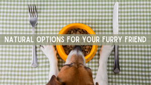 Natural Options for Your Furry Friend