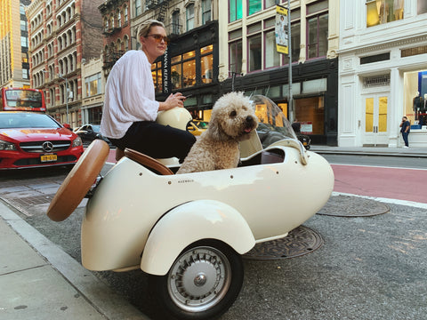 dog riding in motorcycle with woman