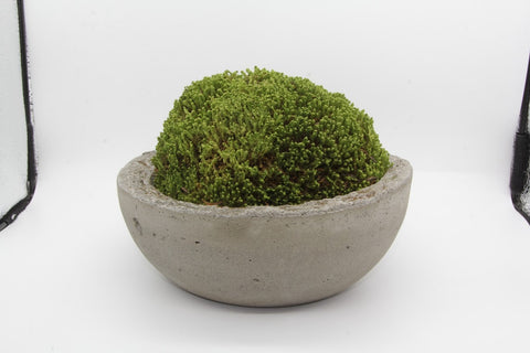 Moss Bowl Single Color Rough Edge-Unfound Design