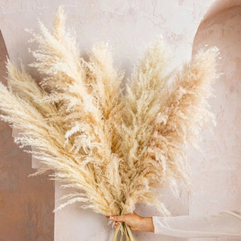 Real dried pampass grass-flower head 50-60cm