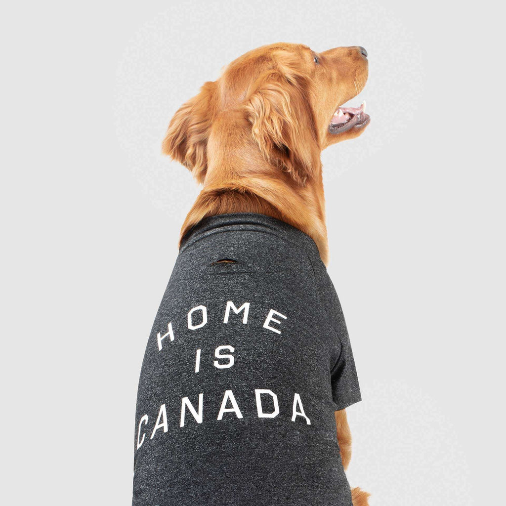 P/C x Canada Pooch Home is Canada Dog T-Shirt - Heather Grey