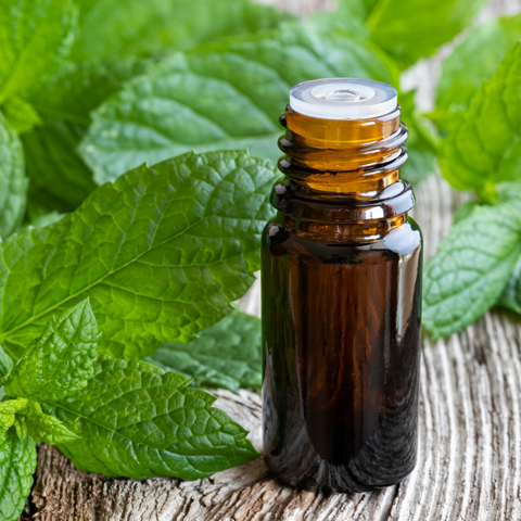 10ml Peppermint Essential Oil | Aromatherapy