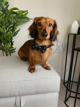 Load image into Gallery viewer, The all dressed up and ready for walkies Bow Tie