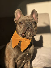 Load image into Gallery viewer, The Marvellous in Mustard Bow Tie