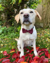 Load image into Gallery viewer, Red and White Bow Tie For Dogs