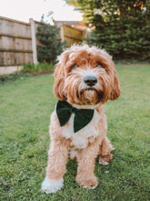 Load image into Gallery viewer, The Gorgeous in Green Bow Tie