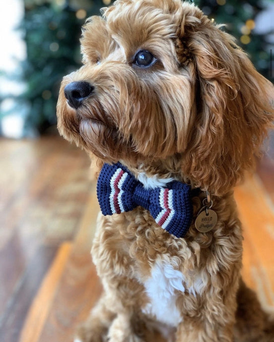 Blue, White and Red Bow Tie For Dogs