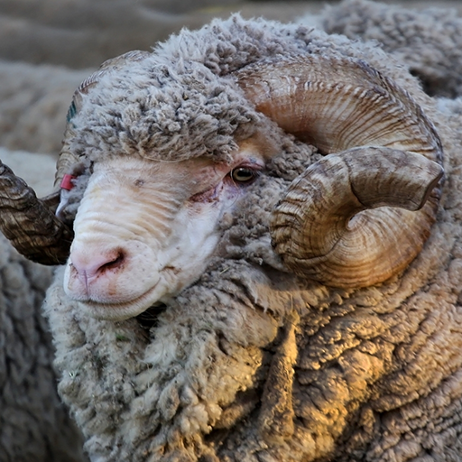 Facts About Wool