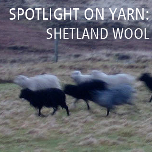 Spotlight on Yarn: Shetland Wool