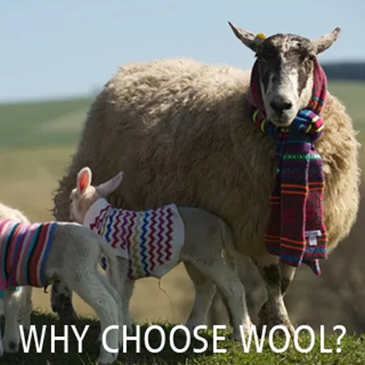 Why Choose Wool