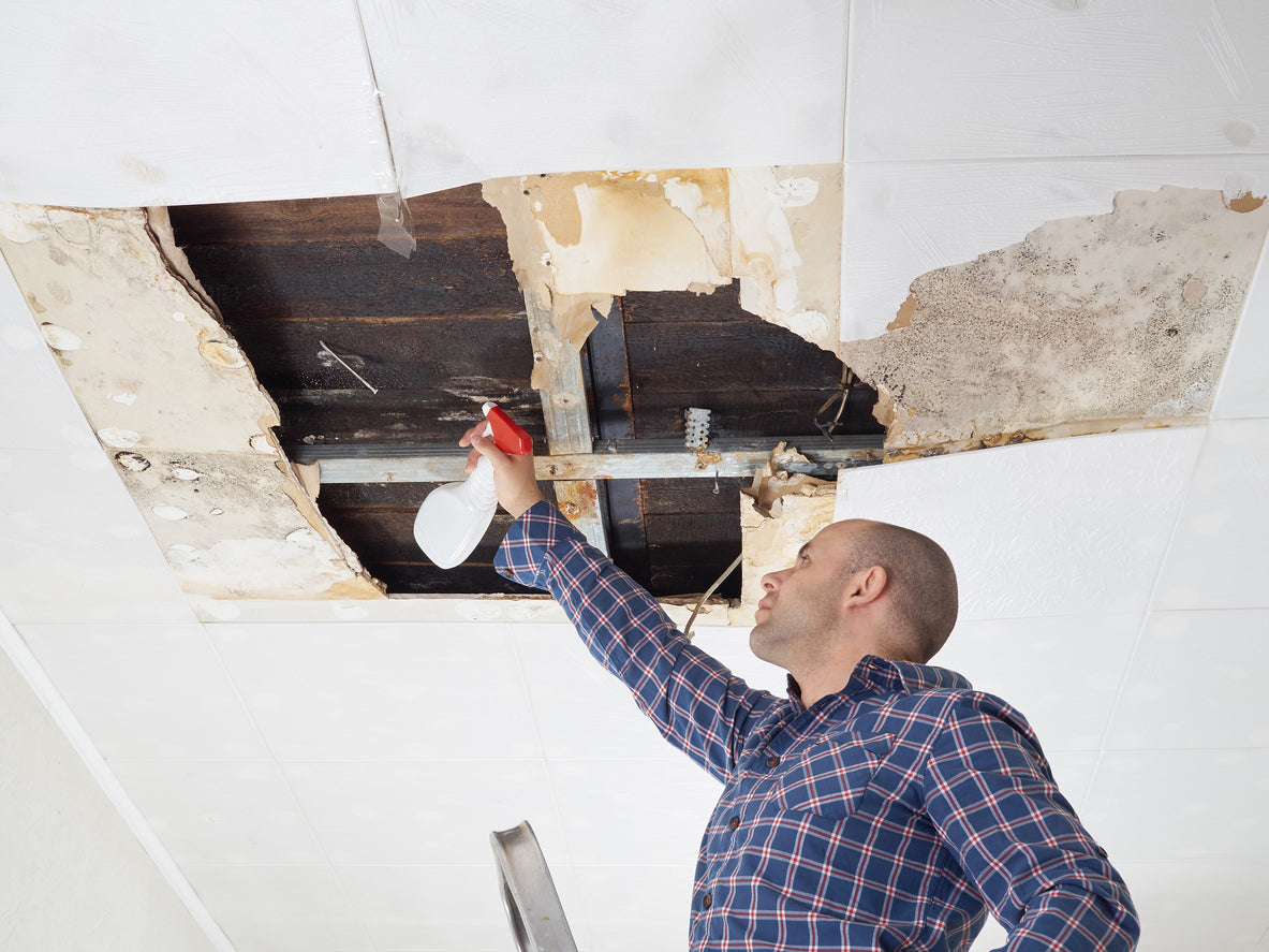 man removing mold from ceiling