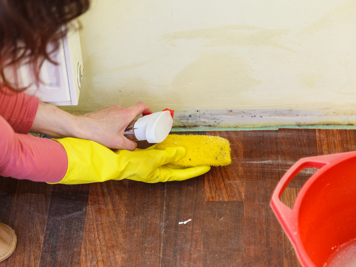 cleaning black mold from a wall