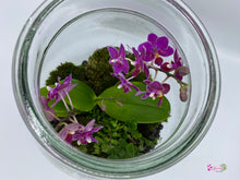 Load image into Gallery viewer, Terrarium - Orchid with LED light