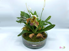 Load image into Gallery viewer, Terrarium - Lady slipper orchid