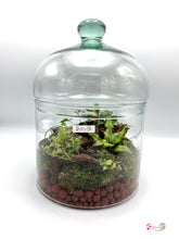 Load image into Gallery viewer, Classic Dome Terrarium Succulent Mix
