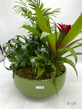 Load image into Gallery viewer, Green Ceramic Indoor Exotic Plant Assortment