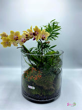 Load image into Gallery viewer, Mini Orchid Cylinder Terrarium