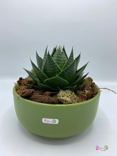 Load image into Gallery viewer, Aristata Aloe Plant
