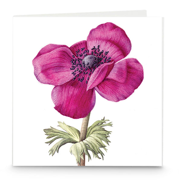 Purple Anemone card