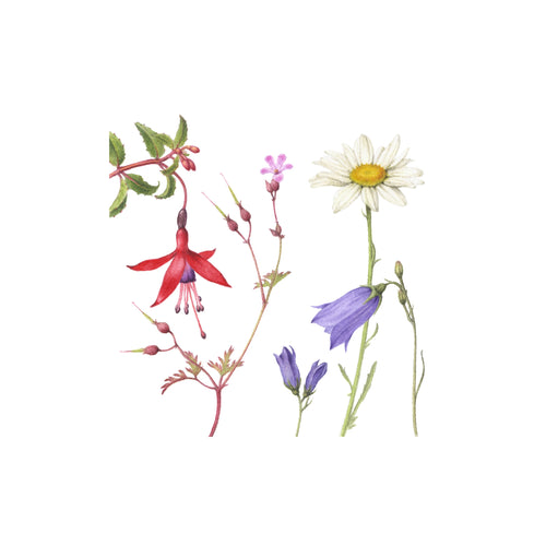 Atlantic Flora I - botanical art print