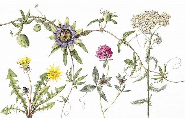 Herbs - limited edition fine art print