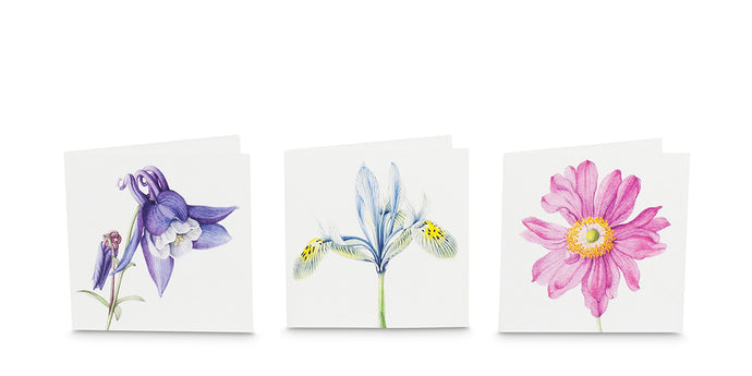 Soft Summer greeting cards