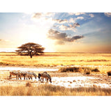 Buy African-animals-zebra-savanna-wallpaper preview in Lebanon