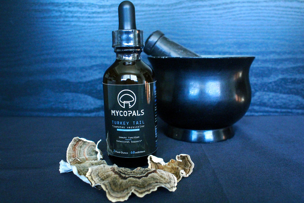 Turkey Tail Double Extract Tincture