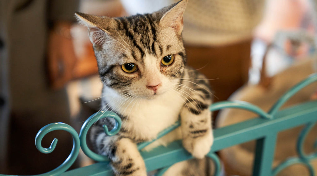 kitten leaning on the fence