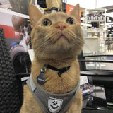 cat wearing gray harness with leash