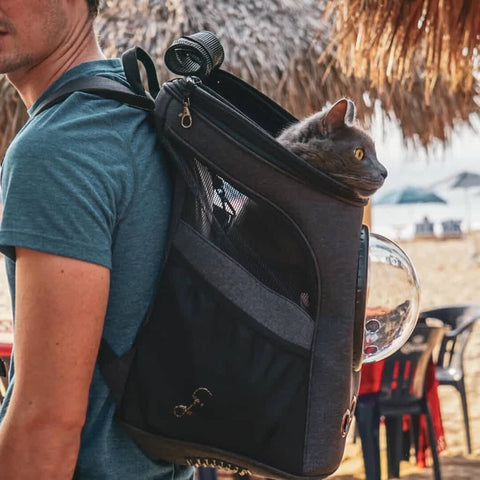 man carrying fat cat backpack walking on the beach