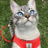 cat wearing red harness with leash