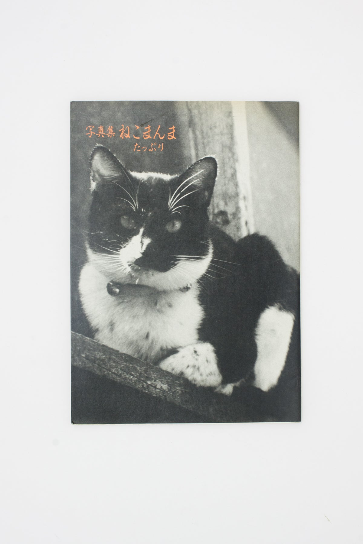 Neko manma 'The Cat is Beautiful' Photobook