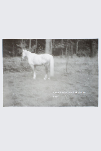 a white horse in a dark paddock - Thomas A Clark