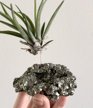 Load and play video in Gallery viewer, Pyrite Air Plant Holder (2XL)