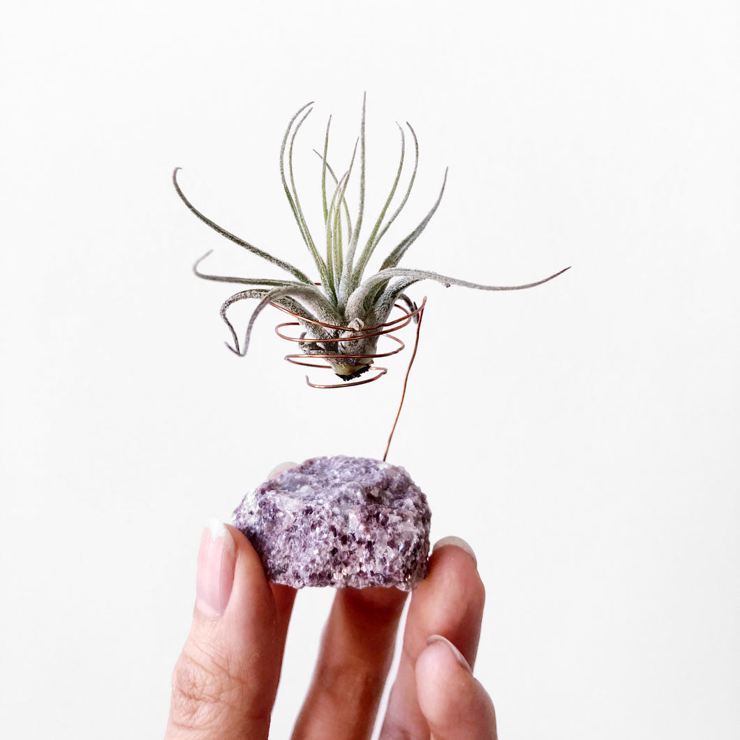 Lepidolite Air Plant Holder
