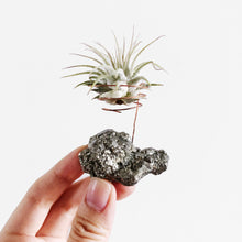 Load image into Gallery viewer, Pyrite Air Plant Holder