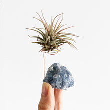 Load image into Gallery viewer, Blue Calcite Air Plant Holder