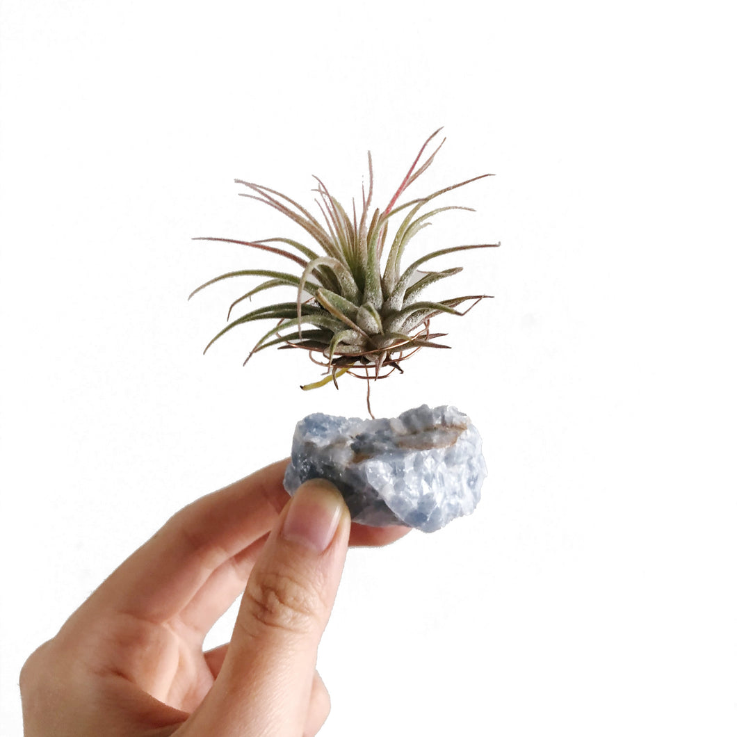 Blue Calcite Air Plant Holder
