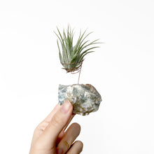 Load image into Gallery viewer, Blue Onyx Air Plant Holder