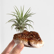 Load image into Gallery viewer, Citrine Air Plant Holder