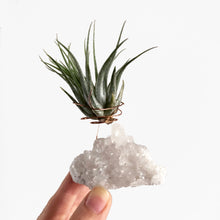 Load image into Gallery viewer, Clear Quartz Air Plant Holder