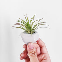 Load image into Gallery viewer, Mini Geometric Cement Air Plant Holder