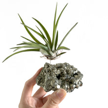 Load image into Gallery viewer, Pyrite Air Plant Holder (2XL)